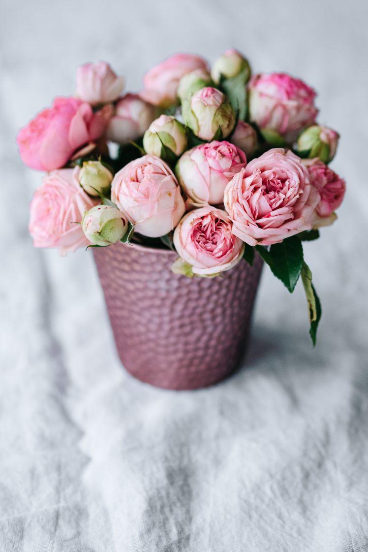 kaboompics_Pink roses in pot (1)